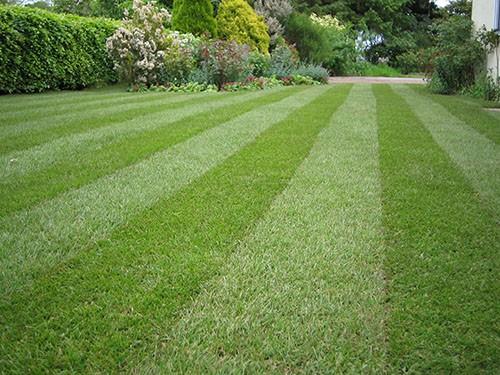 Lawn-Maintenence-03